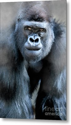 Gorilla In The Mist Large Canvas Art, Canvas Print, Large Art, Large Wall Decor, Home Decor Metal Print by David Millenheft