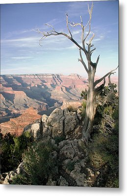 Grand Canyon 5 Metal Print by John Norman Stewart