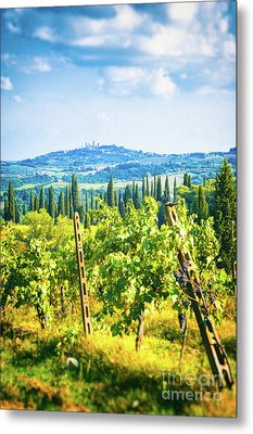 Metal Print featuring the photograph Grapevine In San Gimignano Tuscany by Silvia Ganora