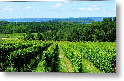 Grapevines On Old Mission Peninsula - Traverse City Michigan Metal Print by Michelle Calkins
