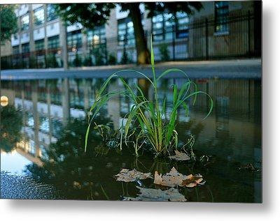 Grass Sprout Metal Print by Brynn Ditsche