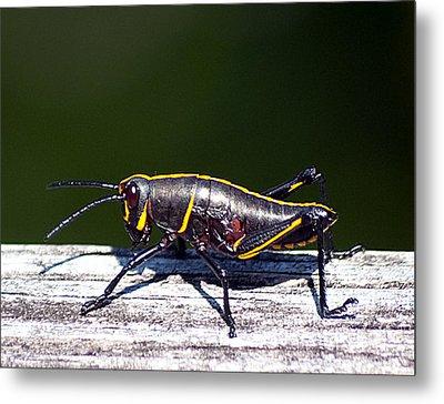 Grasshopper Nymph Metal Print