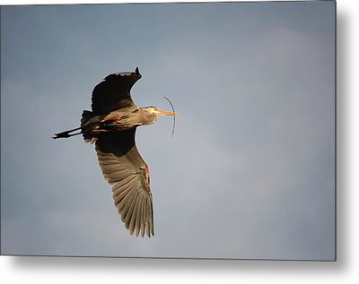 Great Blue Heron In Flight Metal Print by Ann Bridges