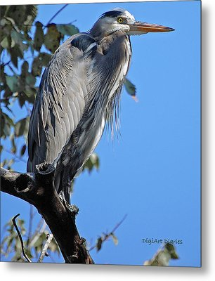 Great Blue Heron Perched Metal Print by DigiArt Diaries by Vicky B Fuller
