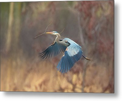 Great Blue Metal Print