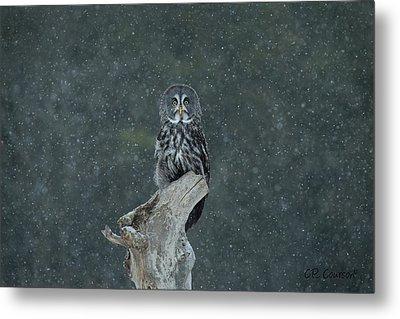 Great Gray Owl In Snowstorm Metal Print