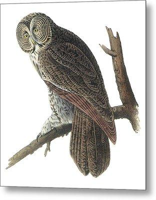 Great Gray Owl Metal Print by John James Audubon