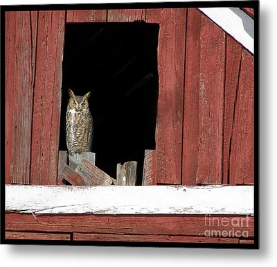 Metal Print featuring the photograph Great Horned Owl by Daniel Hebard