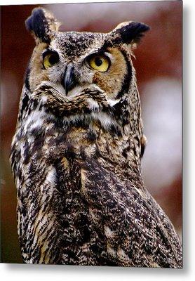 Great Horned Owl Metal Print by Sonja Anderson