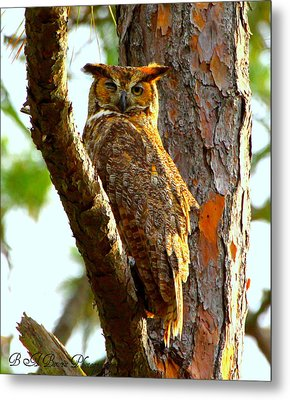 Metal Print featuring the photograph Great Horned Owl Wink by Barbara Bowen