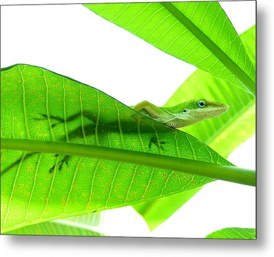 Green Anole On Leaf With Silhouette Metal Print by Joseph Connors