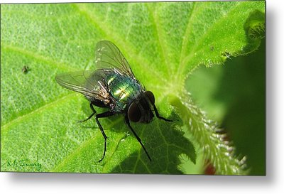 Metal Print featuring the photograph Green Bottle Fly by Maciek Froncisz