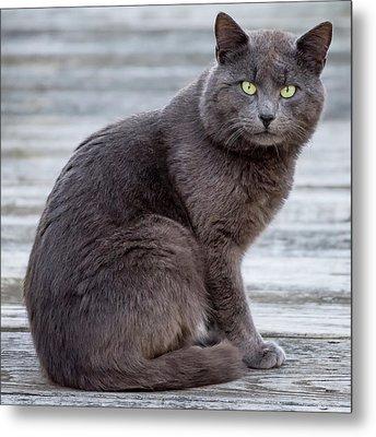 Green Eye Stare Cat Square Metal Print