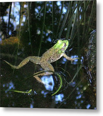 Metal Print featuring the photograph Green Frog by Patricia Januszkiewicz