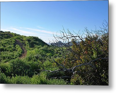 Metal Print featuring the photograph Green Hills And Bushes Landscape by Matt Harang