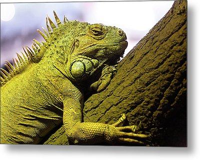 Green Iguana Of Nature Park Metal Print