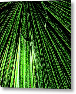 Green Leaf Forest Photo Metal Print