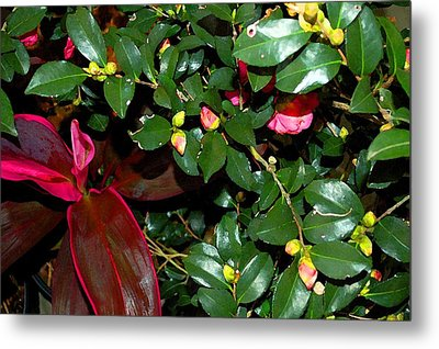 Green Leafs And Pink Flower Metal Print by Michael Thomas