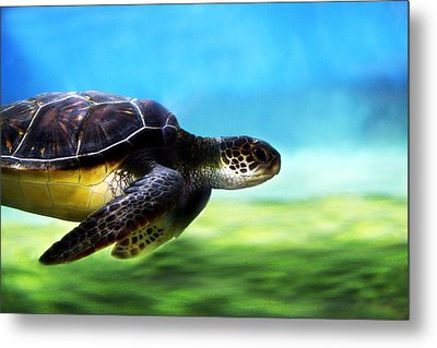 Green Sea Turtle 2 Metal Print by Marilyn Hunt