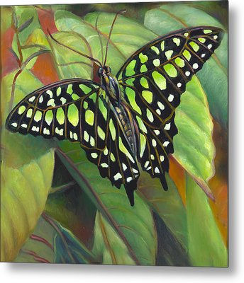 Green Tailed Jay Butterfly Metal Print by Nancy Tilles