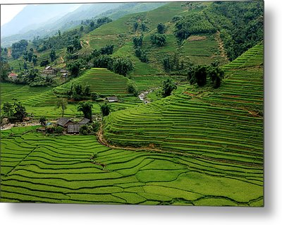 Green Wave Metal Print by M Yousuf Tushar