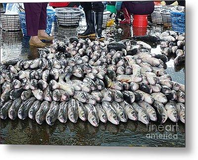Grey Mullet Fish For Sale At The Fish Market Metal Print by Yali Shi