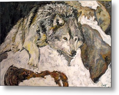 Metal Print featuring the painting Grey Wolf Resting In The Snow by Koro Arandia