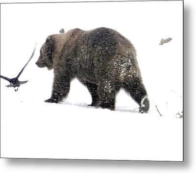 Metal Print featuring the photograph Grizzly by Meagan  Visser