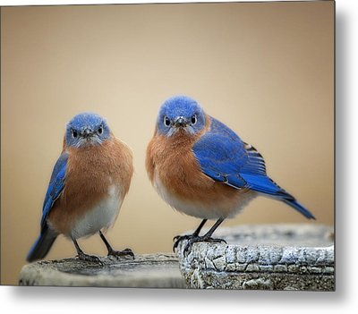 Grumpy Little Men Metal Print by Bonnie Barry