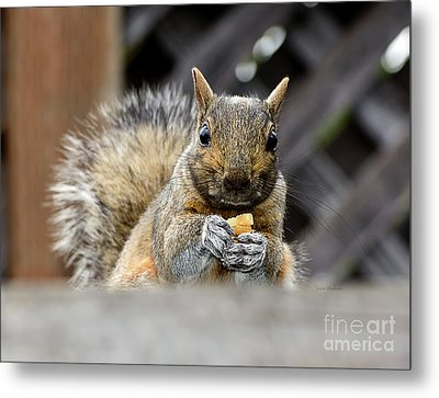 Grumpy Squirrel Metal Print