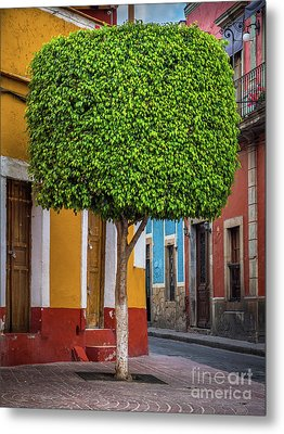 Guanajuato Tree Metal Print