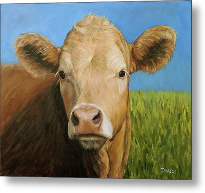 Guernsey Cow In Field With Blue Sky Metal Print by Dottie Dracos