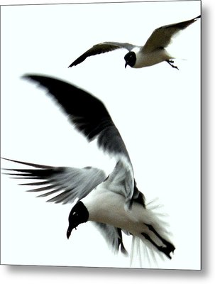 Metal Print featuring the photograph Gulf Gulls by Antonia Citrino