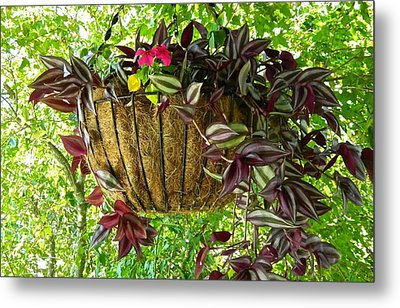 Hanging In There Metal Print by Randy Rosenberger