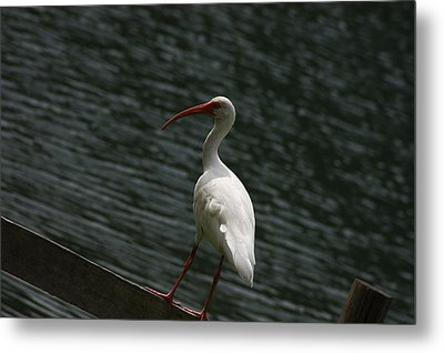 Metal Print featuring the photograph Hanging Out by Michael Albright