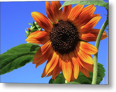 Happy Days Of Summer Metal Print by Marjorie Imbeau