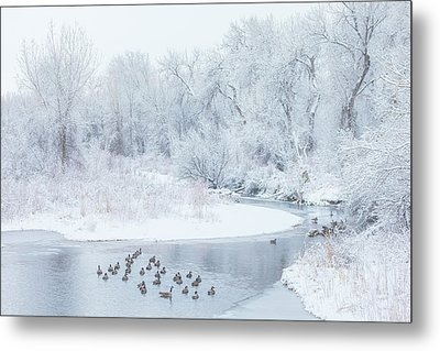 Metal Print featuring the photograph Happy Geese by Darren White