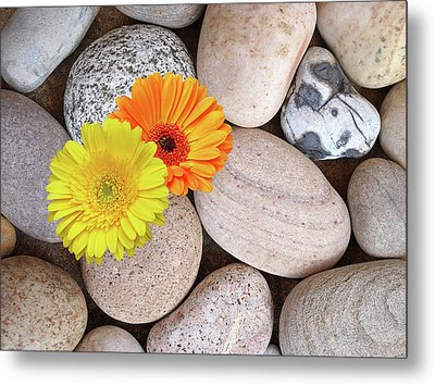 Happy Summer Memories - Sunshine Daisies And Pebbles On The Beach Metal Print