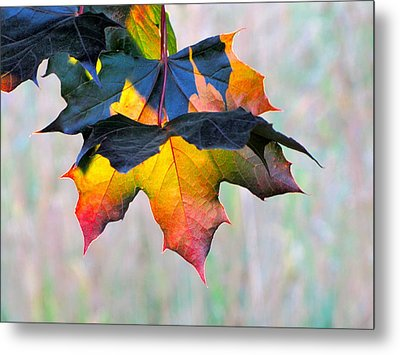 Harbinger Of Autumn Metal Print
