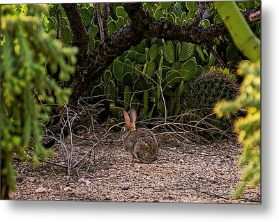 Metal Print featuring the photograph Hare Habitat H22 by Mark Myhaver
