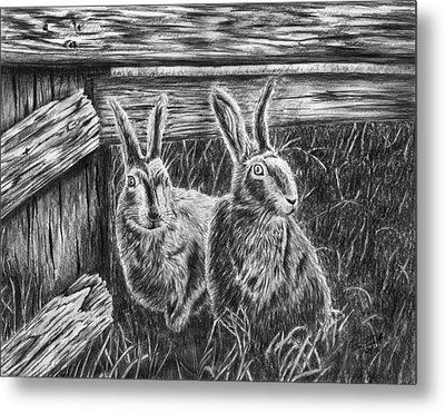 Hare Line  Metal Print by Peter Piatt
