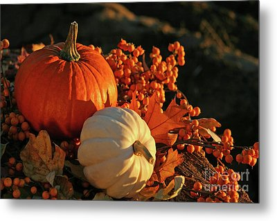 Harvest Colors Metal Print by Sandra Cunningham
