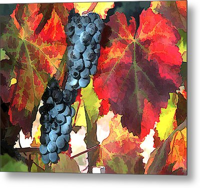 Harvest Time Grapes And Leaves Metal Print by Elaine Plesser