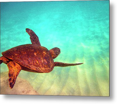 Hawaiian Green Sea Turtle Metal Print by Bette Phelan