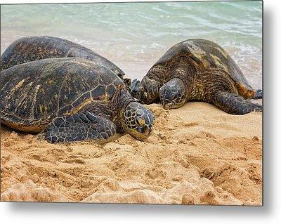 Hawaiian Green Sea Turtles 1 - Oahu Hawaii Metal Print by Brian Harig