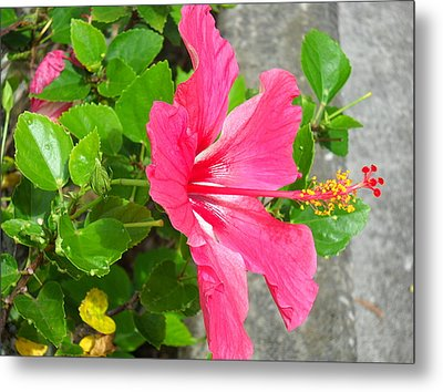 Metal Print featuring the photograph Hawaiian Pink Beauty by Yolanda Koh