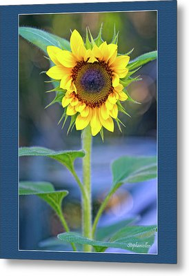 Heart Shaped Sunflower Metal Print by Stephanie Hayes