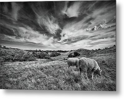 Metal Print featuring the photograph Heather Hills I by Stefan Nielsen
