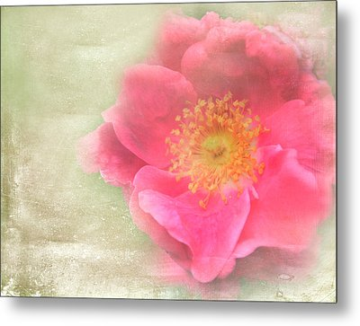 Heirloom Rose Metal Print