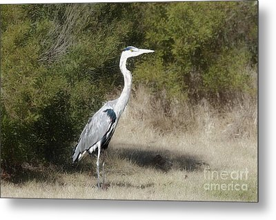 Metal Print featuring the photograph Henry The Heron by Benanne Stiens